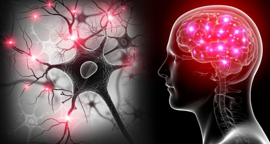 neuroplasticity_brain